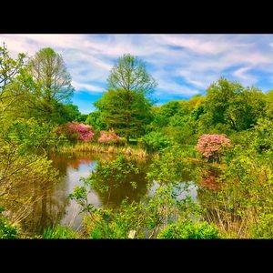 This is Boston in the springtime! Arnold Arboretum